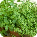 Fresh herbs in Greek cuisine