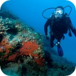 Oceanis Dive Center - diving in Crete